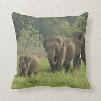 Indian Elephant family coming out of Cushion