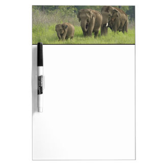 Indian Elephant family coming out of Dry Erase Board