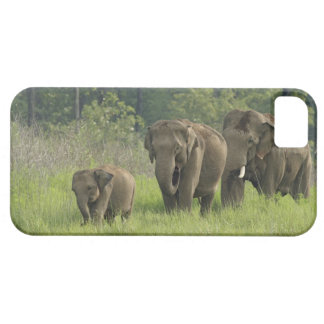 Indian Elephant family coming out of iPhone 5 Cover