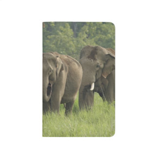 Indian Elephant family coming out of Journal