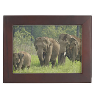 Indian Elephant family coming out of Keepsake Box