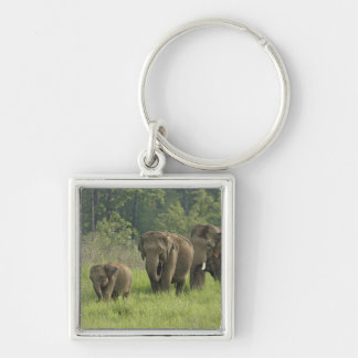 Indian Elephant family coming out of Key Ring