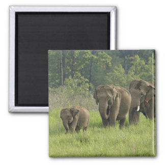Indian Elephant family coming out of Magnet