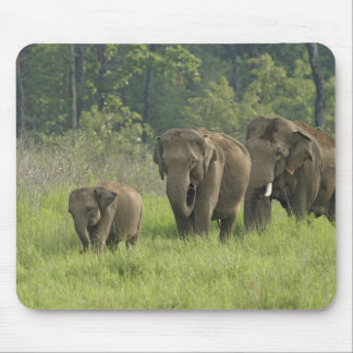 Indian Elephant family coming out of Mouse Pad