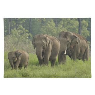 Indian Elephant family coming out of Placemat