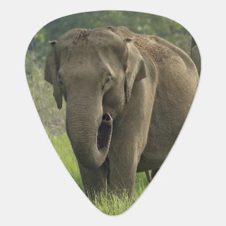 Indian Elephant family coming out of Plectrum