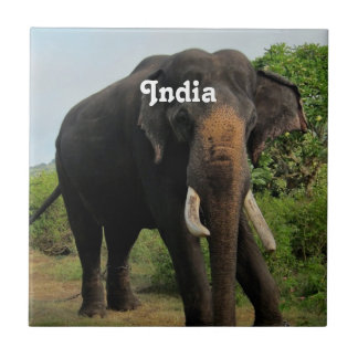 Indian Elephant Small Square Tile