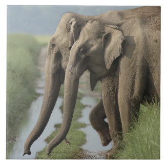 Indian Elephants crossing the track, Corbett Large Square Tile