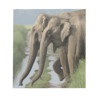 Indian Elephants crossing the track, Corbett Notepad