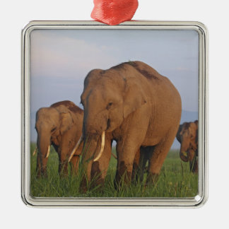 Indian Elephants in the grassland,Corbett Christmas Ornament