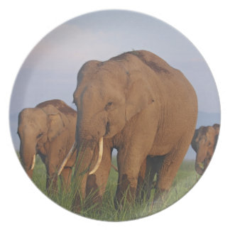 Indian Elephants in the grassland,Corbett Dinner Plates
