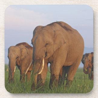 Indian Elephants in the grassland,Corbett Drink Coasters