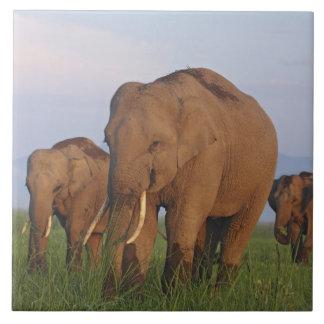 Indian Elephants in the grassland,Corbett Large Square Tile