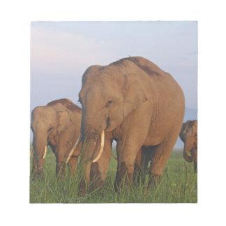 Indian Elephants in the grassland,Corbett Note Pads