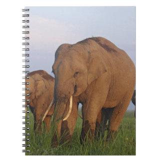 Indian Elephants in the grassland,Corbett Notebook