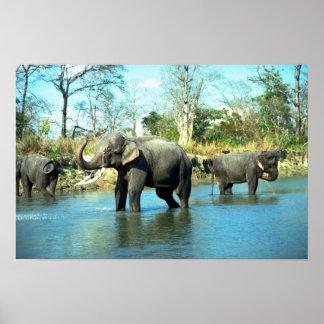 Indian Elephants mud bathing Poster