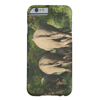 Indian Elephants on the jungle track,Corbett Barely There iPhone 6 Case
