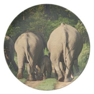 Indian Elephants on the jungle track,Corbett Dinner Plates