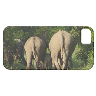 Indian Elephants on the jungle track,Corbett iPhone 5 Cover