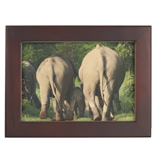 Indian Elephants on the jungle track,Corbett Keepsake Box