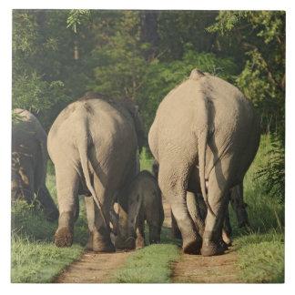 Indian Elephants on the jungle track,Corbett Large Square Tile