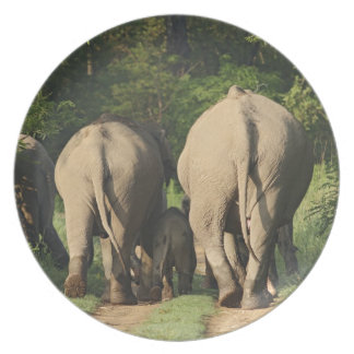 Indian Elephants on the jungle track,Corbett Plate