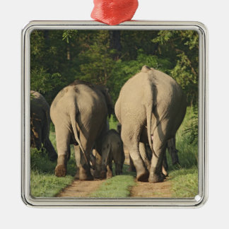 Indian Elephants on the jungle track,Corbett Silver-Colored Square Decoration