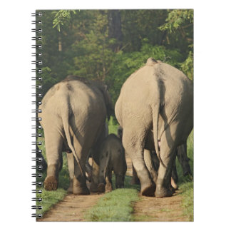 Indian Elephants on the jungle track,Corbett Spiral Notebook