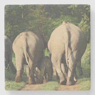 Indian Elephants on the jungle track,Corbett Stone Coaster