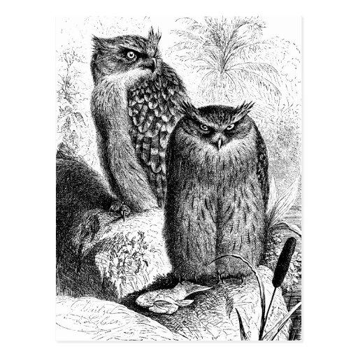 Indian Fishing Owls Vintage Wood Engraving Postcard