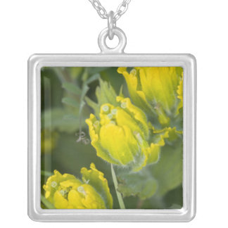 Indian Golden Paintbrush Castilleja Silver Plated Necklace