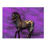 Indian Horse Postcards