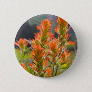 Indian Paintbrush 6 Cm Round Badge