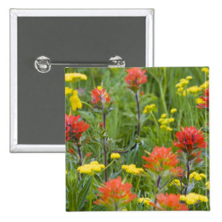 Indian paintbrush and biscuitroot wildflowers 15 cm square badge