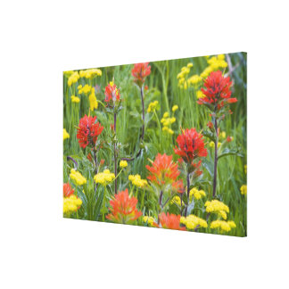 Indian paintbrush and biscuitroot wildflowers canvas print