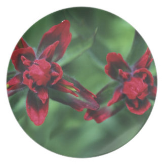 Indian Paintbrush, Banff NP, Alberta, Canada 2 Party Plate