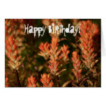 Indian Paintbrush; Happy Birthday Greeting Card