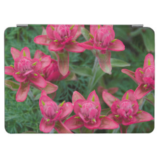 Indian Paintbrush iPad Air Cover