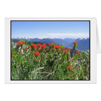 Indian Paintbrush, Olympic National Park Card