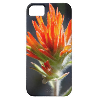 Indian Paintbrush Phone Case
