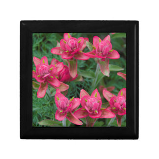 Indian Paintbrush Small Square Gift Box