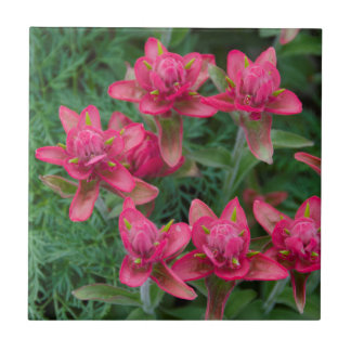 Indian Paintbrush Small Square Tile