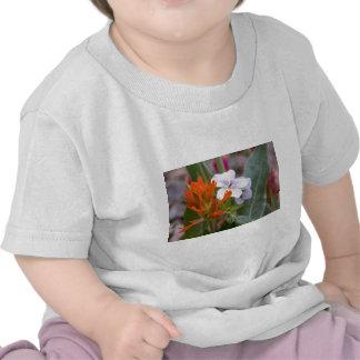 Indian Paintbrush T Shirts