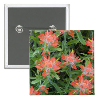Indian paintbrush wildflowers in the Many 15 Cm Square Badge