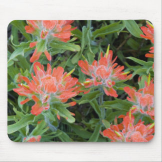 Indian paintbrush wildflowers in the Many Mouse Pad