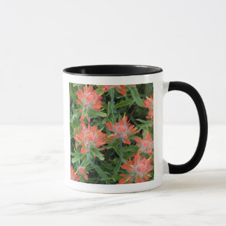 Indian paintbrush wildflowers in the Many Mug