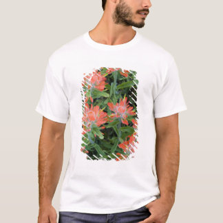 Indian paintbrush wildflowers in the Many T-Shirt
