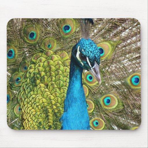 Indian Peacock. Mousepads