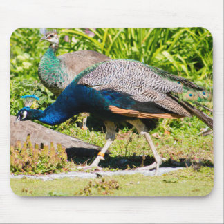 Indian Peacock Mouse Pad