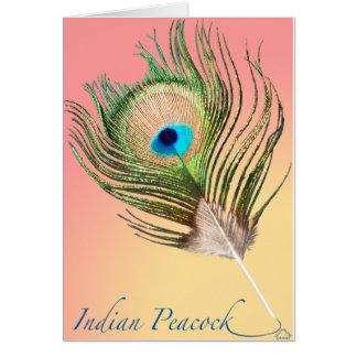 Indian Peacock Tail Card